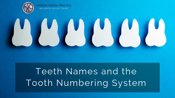 Teeth Names and the Tooth Numbering System